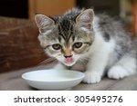 Cute Kitten Eat Milk