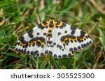 Small photo of Abraxas grossulariata butterfly in the grass at summertime
