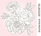 amazing hand drawn bouquet of... | Shutterstock .eps vector #305558750