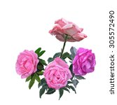 painting pink rose bouquet ... | Shutterstock . vector #305572490