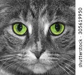 Tabby Cat Photo Converted To...