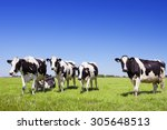 Black And White Cows In A...