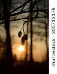 Small photo of Alder tree seed at sunset