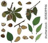 vector illustration of nuts | Shutterstock .eps vector #305839946