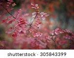 macro rose   Shutterstock . vector #305843399
