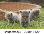 Stock photo three amazing kittens 305846420