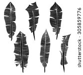 feather set. illustration.... | Shutterstock . vector #305859776