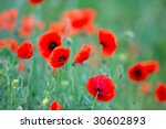 red poppies on field | Shutterstock . vector #30602893