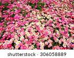 pink daisy flowers | Shutterstock . vector #306058889