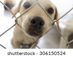 Shelter Dog Is Cute Dog In An...