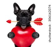 valentines french bulldog dog