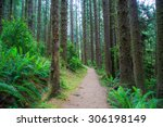hiking trail in fern canyon in... | Shutterstock . vector #306198149