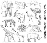 hand drawn animal planet set ... | Shutterstock .eps vector #306229496