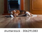Resting Dog On Wooden Floor...