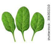 spinach leaves close up. fresh... | Shutterstock .eps vector #306302210