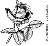 hand drawn vector roses flower  | Shutterstock .eps vector #306312800