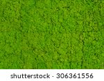 Green Moss Background  Mossy...