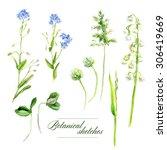 botanical watercolor sketches...   Shutterstock . vector #306419669
