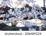 Japan Sakura Cherry Blossom ...