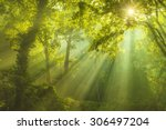 rays of sunlight and green... | Shutterstock . vector #306497204