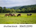 A Horses In A Field