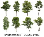 collection of isolated tree on... | Shutterstock . vector #306531983