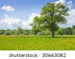 summer landscape with oak tree | Shutterstock . vector #30663082