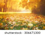 fallen autumn leaves on grass... | Shutterstock . vector #306671300