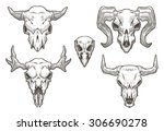 Drawing Animal Skulls Set ...