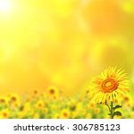 Bright Sunflowers On Yellow...