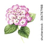 Watercolor With Pink Hydrangea...