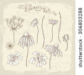 vintage flora collection. all... | Shutterstock .eps vector #306803288