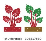 rhubarb plant vector...   Shutterstock .eps vector #306817580