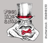 image frog  toad  in top hat.... | Shutterstock .eps vector #306848150