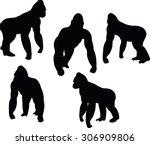 vector image vector image  ... | Shutterstock .eps vector #306909806