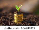 golden coins in soil with young ... | Shutterstock . vector #306934319