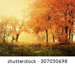 Autumn In Sunny Forest  Natura...