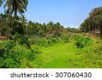 Tropical Nature In The Area Of...