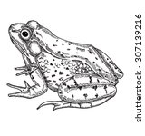 Frog Isolated Vector...