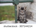 Stock photo little kitten with blue eyes in the streets of istanbul turkey 307144214