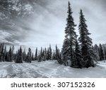 Trees In Winter Landscape In...