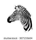 Zebras Portrait. Vector...