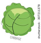 cabbage | Shutterstock . vector #307211378