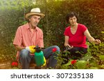 senior man and woman working in ... | Shutterstock . vector #307235138