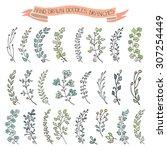 doodles branches  laurels set... | Shutterstock .eps vector #307254449