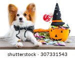 cute dog wearing a halloween... | Shutterstock . vector #307331543