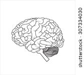 human brain  vector illustration | Shutterstock .eps vector #307334030