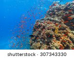 beautiful coral reef with fish...   Shutterstock . vector #307343330