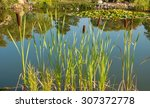 Summer Landscape With Reeds An...