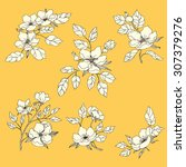 set of hand drawn flowers of... | Shutterstock .eps vector #307379276